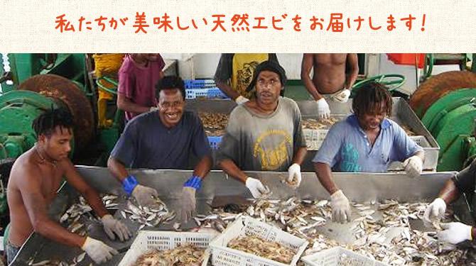 パプアニューギニア海産:美味しいエビをお届けします!